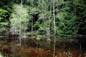 Povodeň - zatopený les IMG_3092