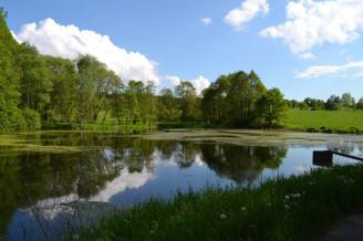 rybník částečně zarostlý - 08