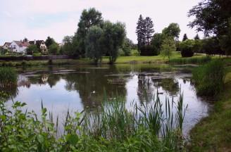 rybník obec - IMG_3324