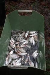 výlov malé ryby - IMG_8770