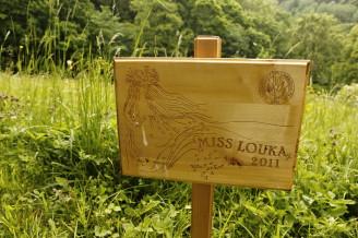 Misss louka - KRNAP 0037