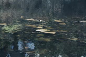 Vltava málo vody Kamýk konec březen 2014