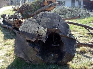 pokácený strom 2 DSCN2279