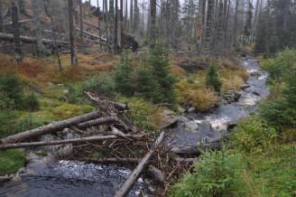 potok v lese - DSC_0108