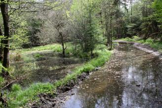 voda na lesní cestě