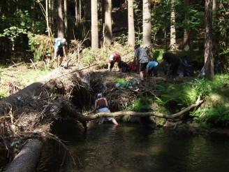 úklid řeky
