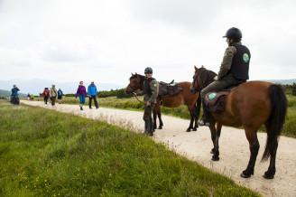 koně KRNAP - _MG_9143