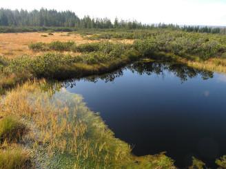 rašeliniště - slať šumava - DSCN7441