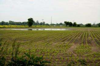 pole a voda povodeň - IMG_3267