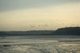 Bohdaneč - loučení s ptáky - IMG_8744