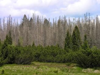 suchý les - DSCN0428