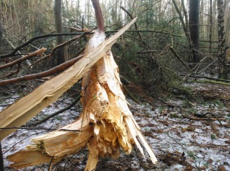 NP Podyjí ledovka škoda les borovice