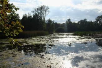 mokřad milíčovské rybníky IMG_5874