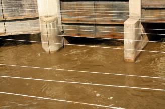 znečištění vody - IMG_4490