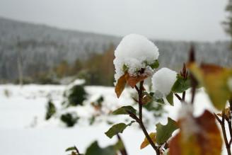 IMG_0239 sníh