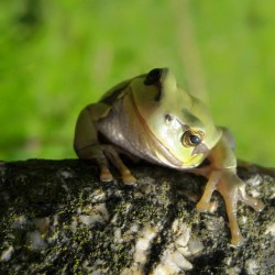 milá žába Lenka Böhmová