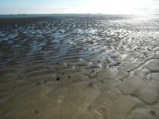 půda pobřeží