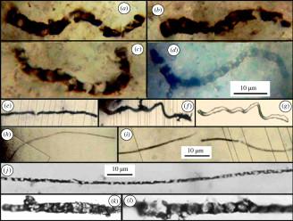 fosílie bakterie bez evoluce