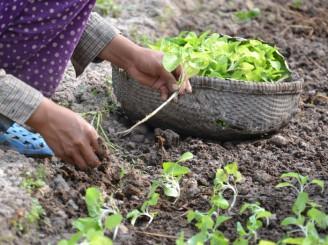 rozvojovka - pěstování plodin