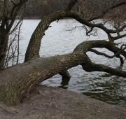 rybník Hamerák