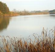 rybník ptačí oblast - IMG_8713