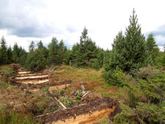 Lesy ČR - česko - saský projekt