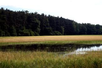 Povodeň - zatopené pole - IMG_3218