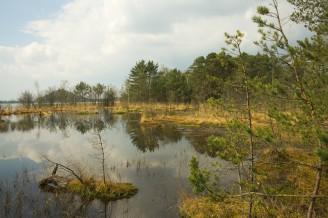 SWAMP - máchovo jezero - IMG_3744_u