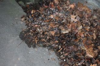 odpad - listí ulice - IMG_0952_U