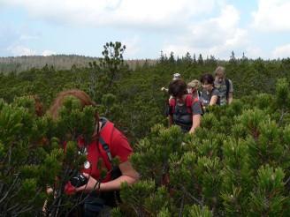 Šumava divočina NP