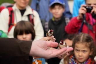KRNAP vítání ptačího zpěvu 2015