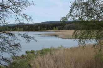 Padrť - krajina rybník rákosí - IMG_6351