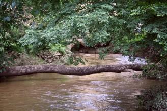 Povodeň - bahno na listech- IMG_3373