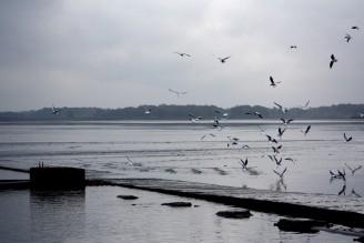 ptáci voda rybník Rožmberk - IMG_7976