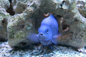 IMG_2460 akvarijní ryba