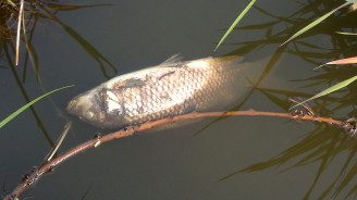 lekla ryba