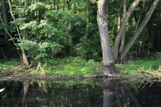 les potok voda krajina - IMG_8250