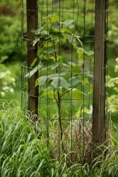 lesnictví strom ochrana - IMG_0646