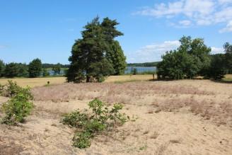 Veselské pískovny a rybník - IMG_8809