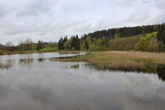 krajina rybník les - IMG_6162