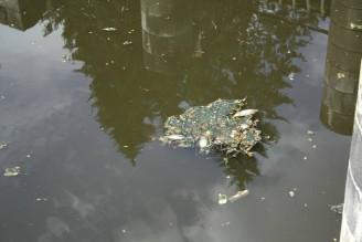 mrtvé ryby 8561_n