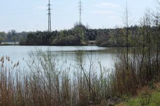 ptáci - rybník Čelákovice - IMG_4880