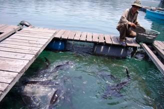 rybí farma Asie