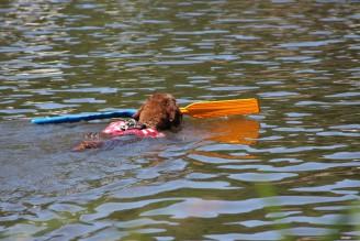 záchrana voda pes - IMG_0976