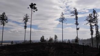 LČR - les požár foto