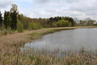rybník - IMG_6178