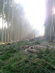 ČIŽP nelegální těžba les