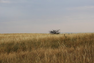 krajina - sucho