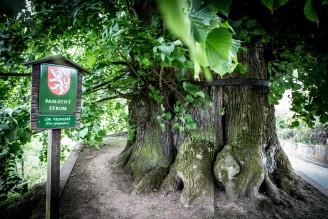 lípa Tatobity strom roku 2015