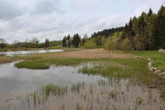 rybník les IMG_6161